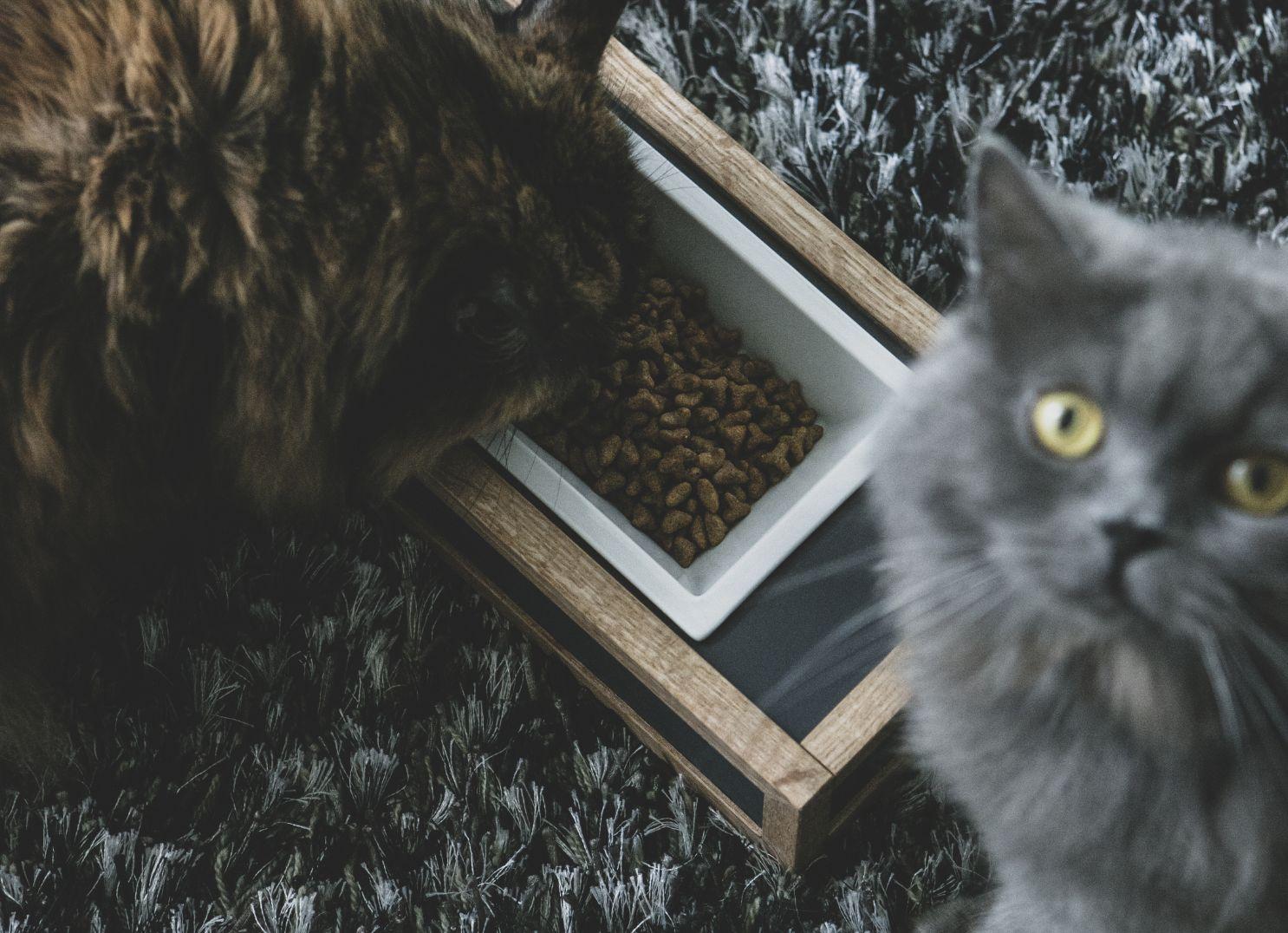 GOTHAM / pet feeder