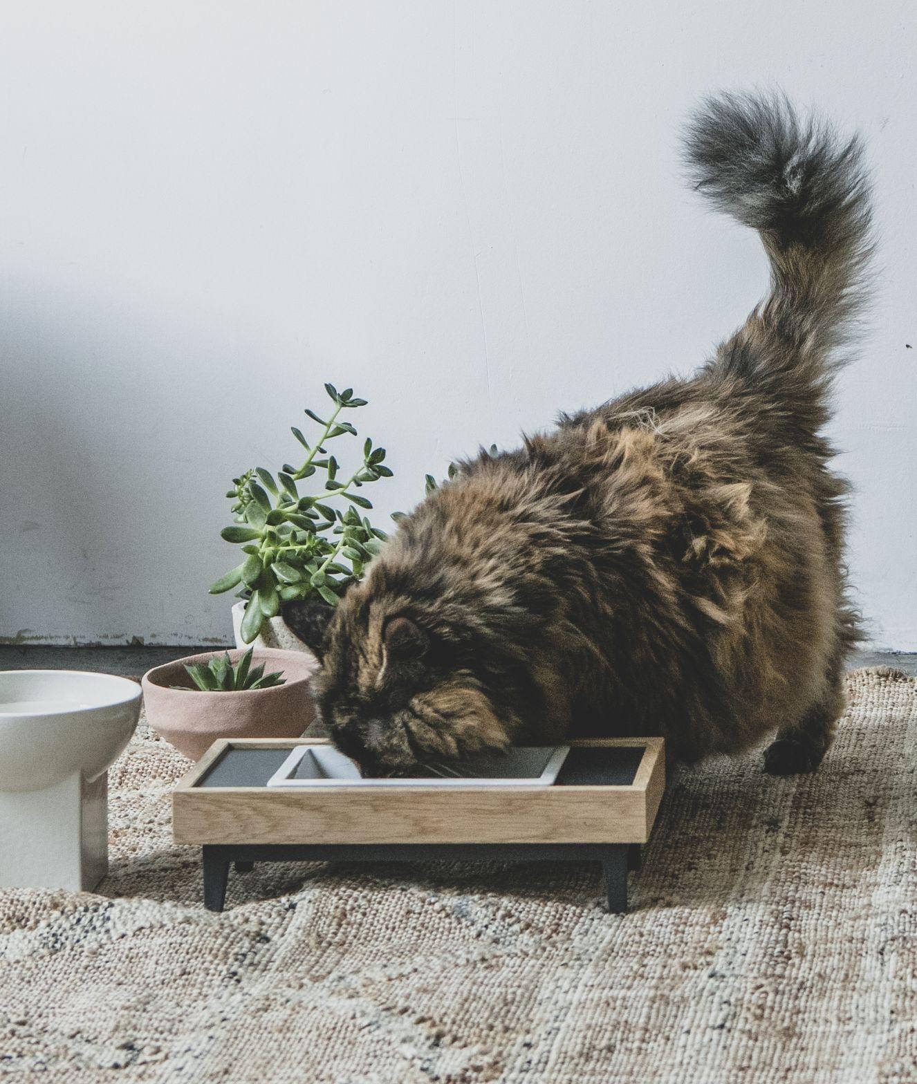 MALTA / pet feeder