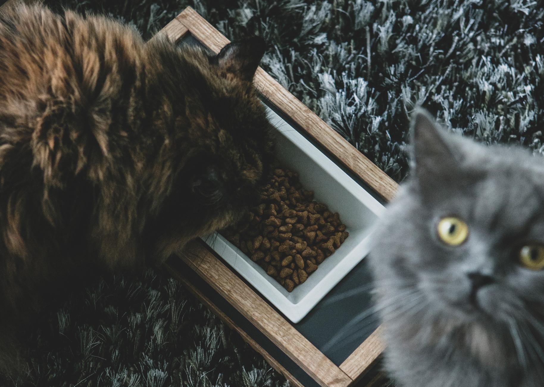 猫の餌入れ